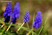 m3_107581_hya_fb.jpg