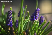 m3_107630_hya_fb.jpg