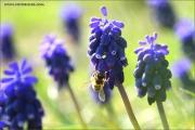 m3_108458_hya_fb.jpg