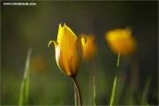 m3_108976_witu_fb.jpg