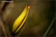 m3_120251_tulpe_fb.jpg