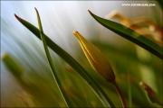 m3_120262_tulpe_fb.jpg