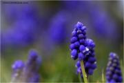 m3_813372_hya_fb.jpg