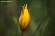 m3_815881_tulpe_fb.jpg