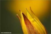 m3_815918_tulpe_fb.jpg