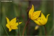 m3_816052_witulpe_fb.jpg