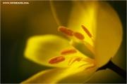 m3_818190_tulpe_fb.jpg