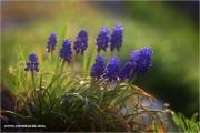 m3_919593_hya_fb.jpg