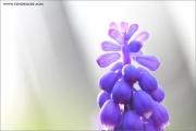 m3_919636_hya_fb.jpg