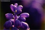 m3_919647_hya_fb.jpg