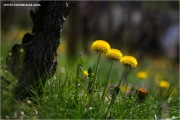 m3_920072_rebe_fb.jpg