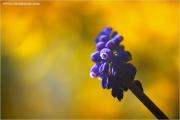 m3_920156_hya_fb.jpg
