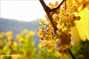 d100_151308_riesling_fb