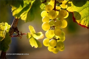 d100_164174_riesling_fb