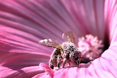rosa-elke-lehnert