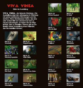 viva-vinea-1